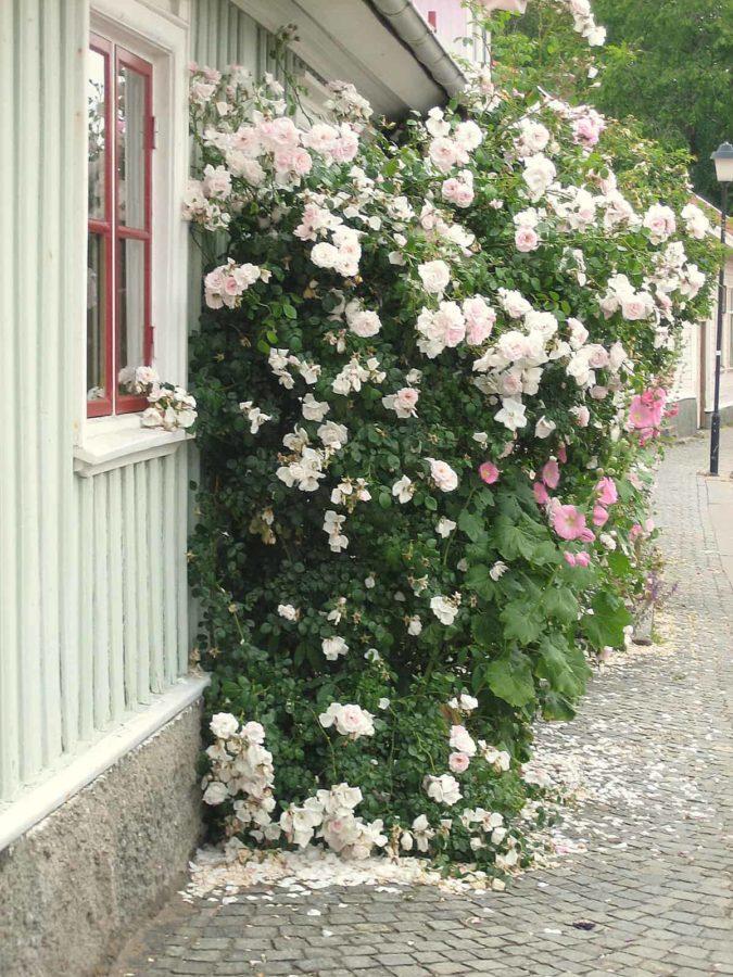 Sonjas trädgård 032