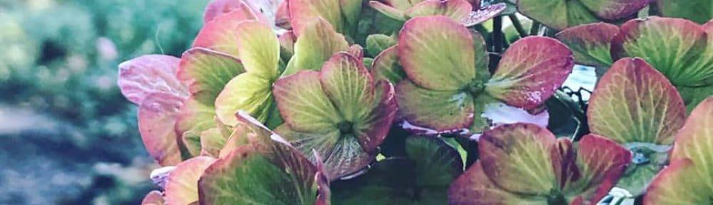 Debora Garden